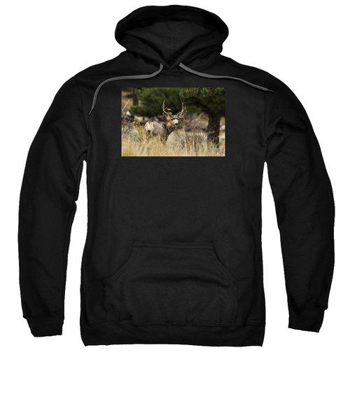 Mule Deer I Sweatshirt