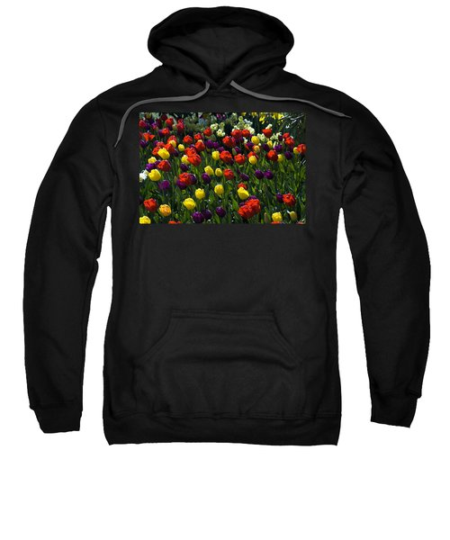 Multicolored Tulips At Tulip Festival. Sweatshirt