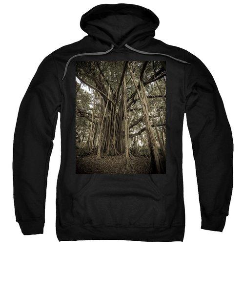 Old Banyan Tree Sweatshirt