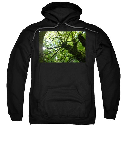 Old Growth Tree In Forest Sweatshirt