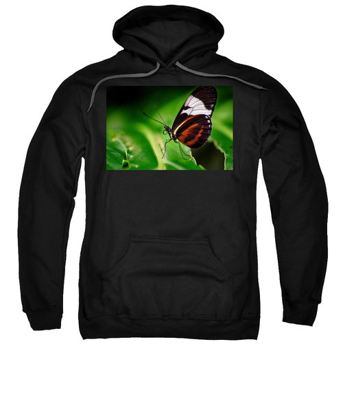 On The Wings Of Beauty Sweatshirt