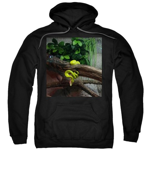 Out Of Africa Tree Snake Sweatshirt