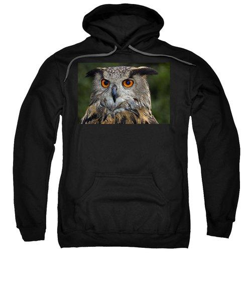 Owl Bubo Bubo Portrait Sweatshirt