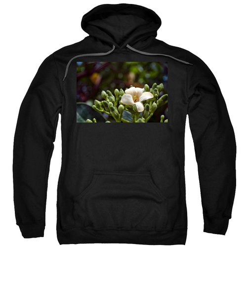 Papaya Flower Sweatshirt