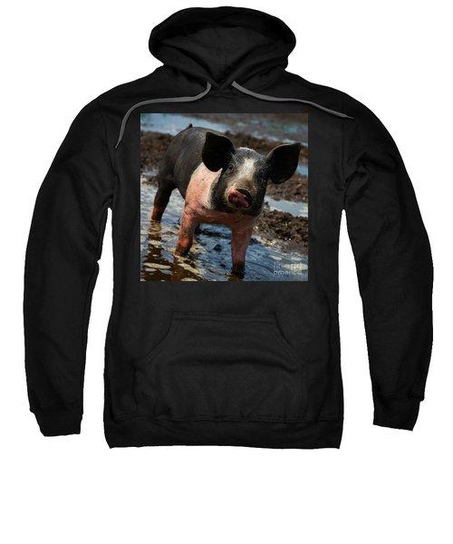 Pig In The Mud Sweatshirt