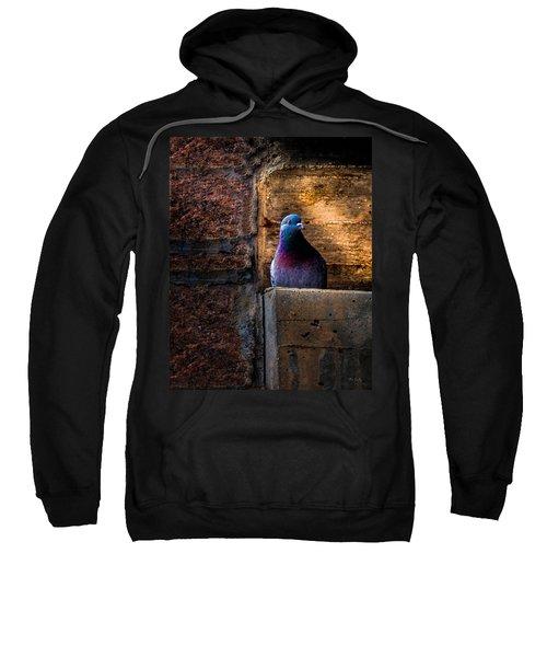 Pigeon Of The City Sweatshirt