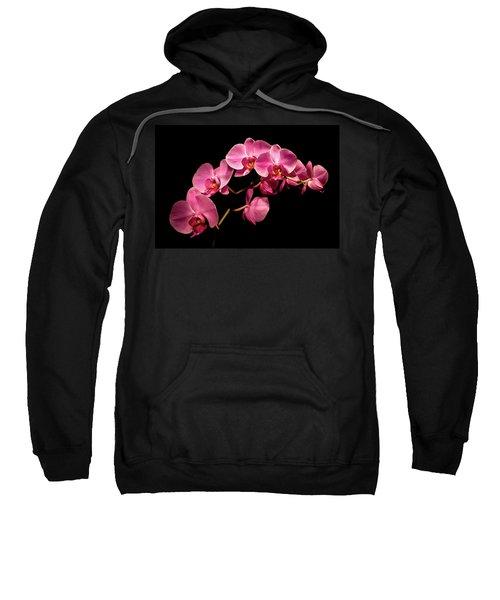 Pink Orchids 3 Sweatshirt