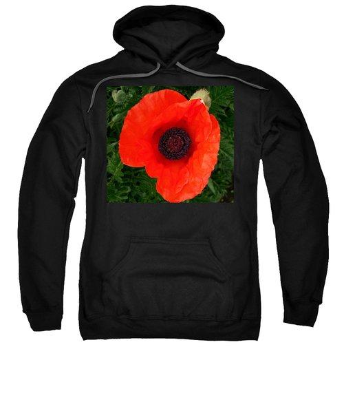 Poppy Of Remembrance  Sweatshirt
