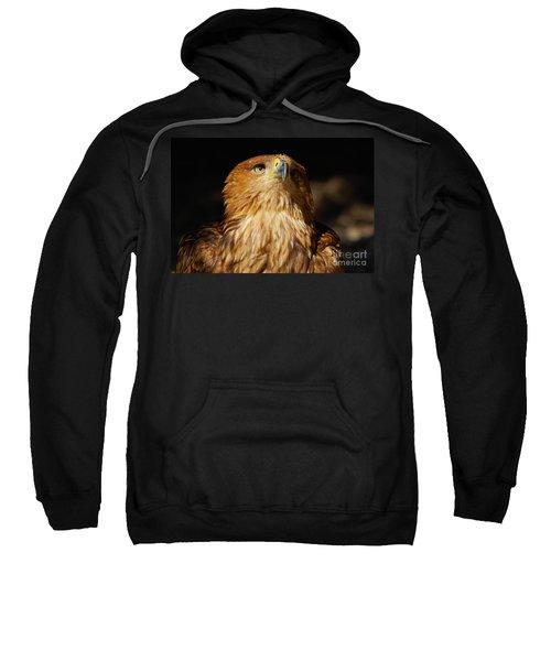 Portrait Of An Eastern Imperial Eagle Sweatshirt