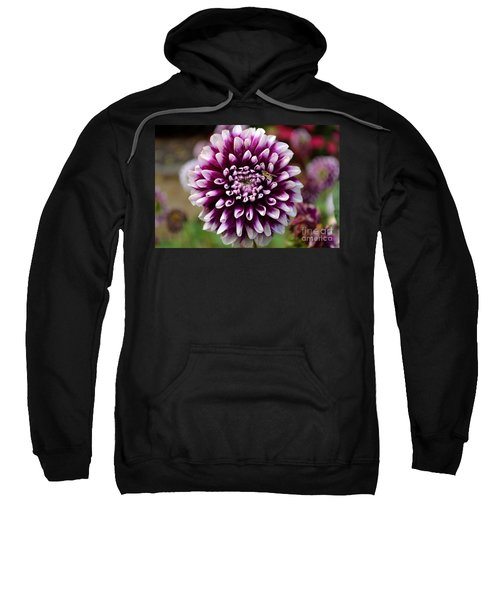 Purple Dahlia White Tips Sweatshirt