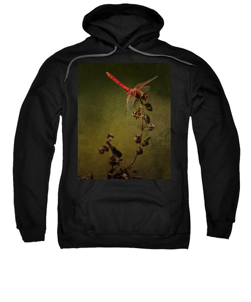 Red Dragonfly On A Dead Plant Sweatshirt