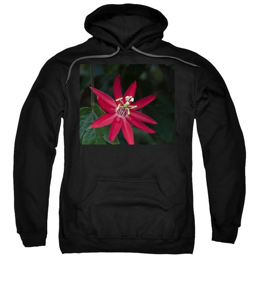 Red Passion Flower Sweatshirt