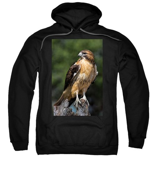 Red Tail Hawk Portrait Sweatshirt