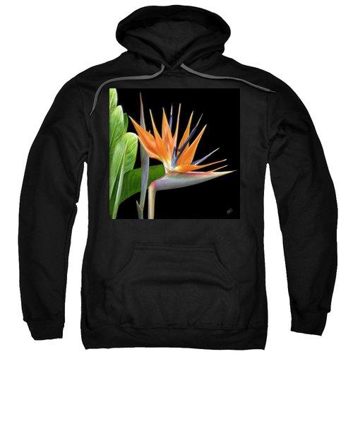 Royal Beauty I - Bird Of Paradise Sweatshirt