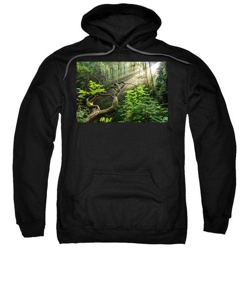 Sacred Grove Sweatshirt