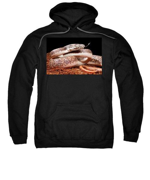 Savu Python In Defensive Posture Sweatshirt