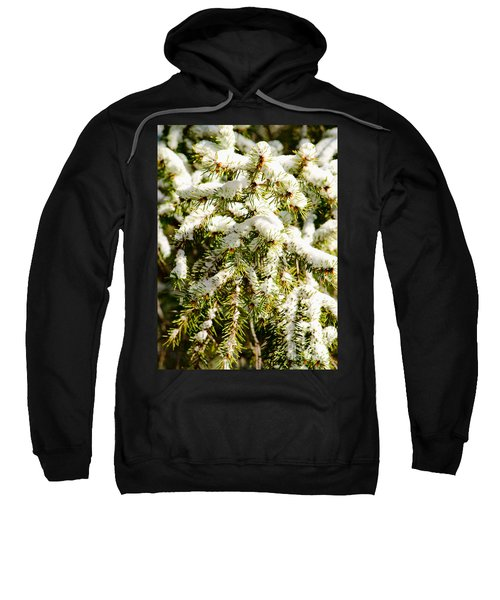 Snowy Pines Sweatshirt