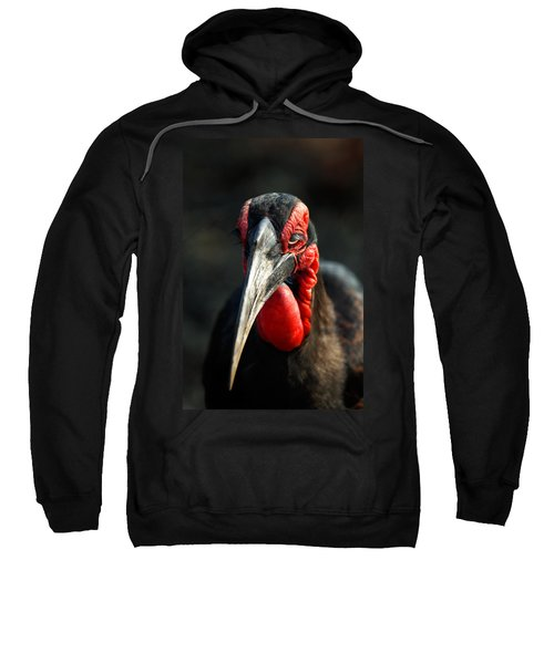 Southern Ground Hornbill Portrait Front View Sweatshirt by Johan Swanepoel