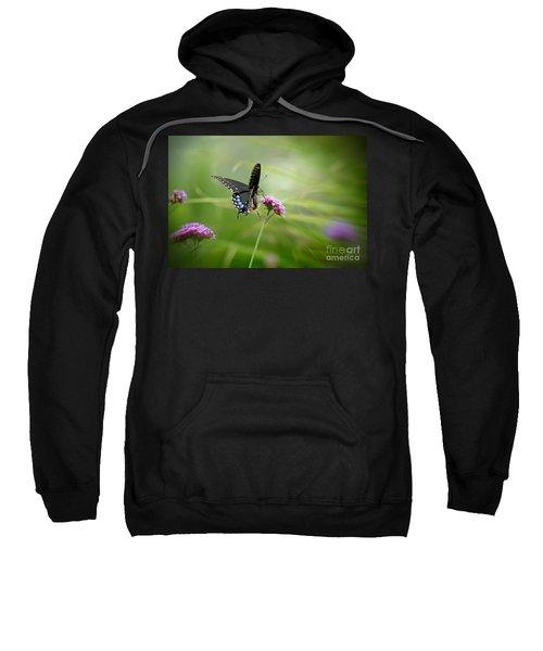 Spicebush Swallowtail Butterfly Sweatshirt