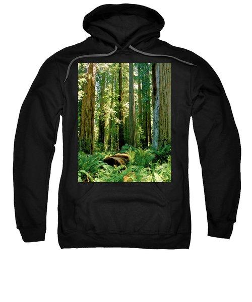 Stout Grove Coastal Redwoods Sweatshirt