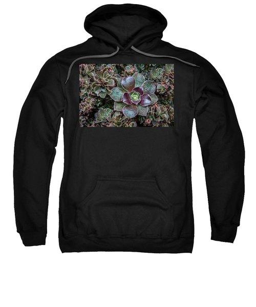 Succulent Art Sweatshirt