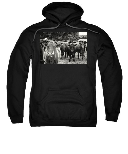 Tennessee Cattle Sweatshirt