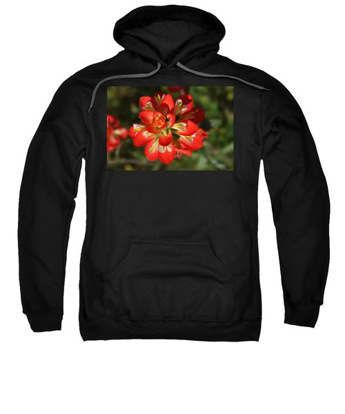 Texas Paintbrush Sweatshirt