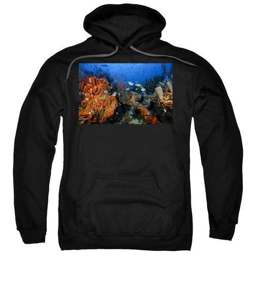 The Active Reef Sweatshirt