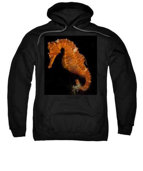 The Bright Orange Seahorse Sweatshirt