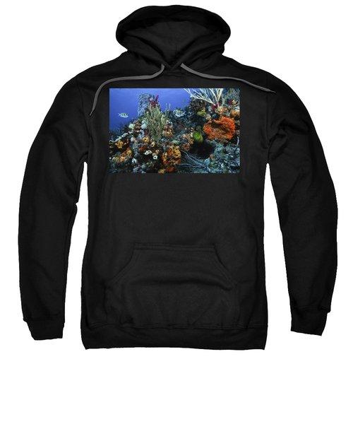 The Busy Reef Sweatshirt