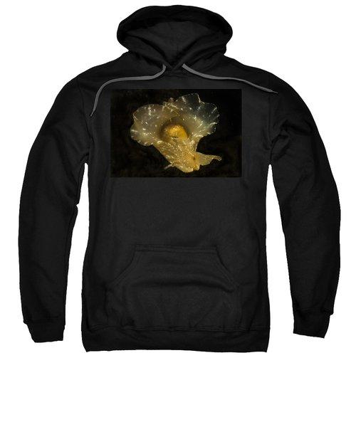 The Flying Aplysia Brasiliana One Sweatshirt