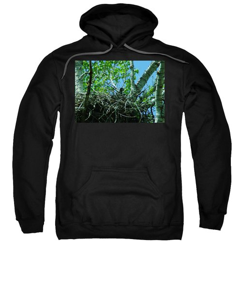 The Young Eaglet Peaks Out  Sweatshirt