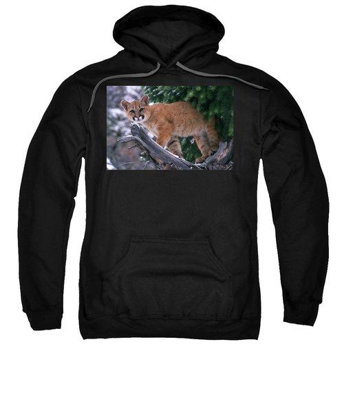 T.kitchin 15274d, Cougar Kitten Sweatshirt