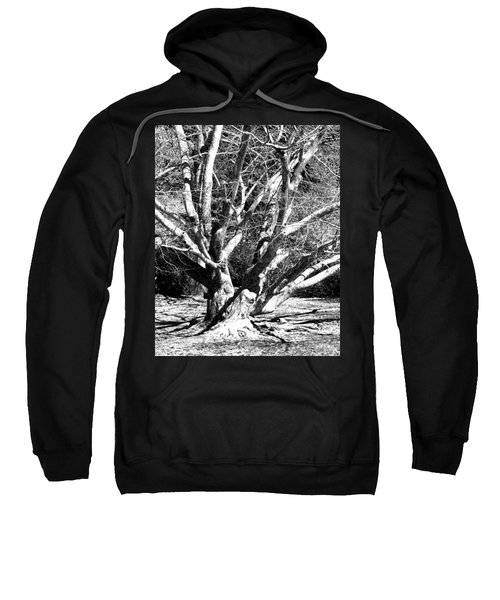 Tree Study In Black N White Sweatshirt