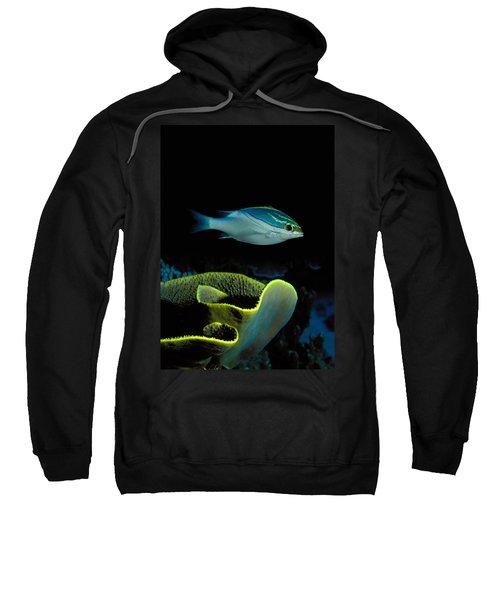 Two-lined Monocle Bream Scolopsis Sweatshirt