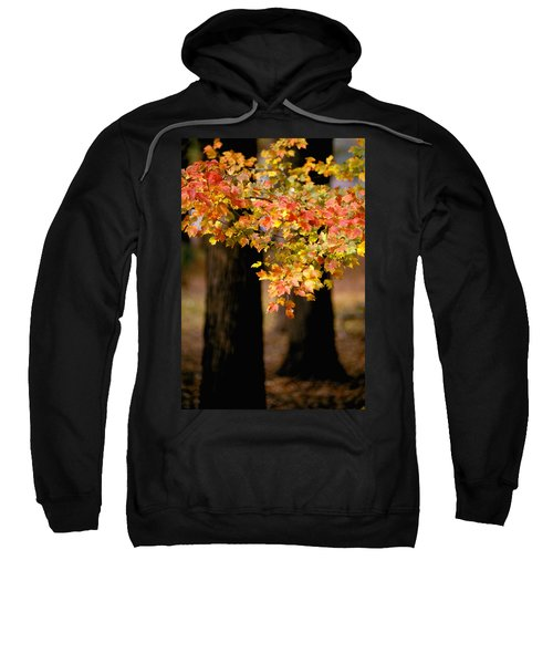 Two Trees Sweatshirt