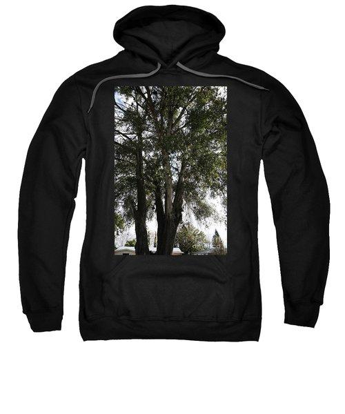 Up-view Of Oak Tree Sweatshirt
