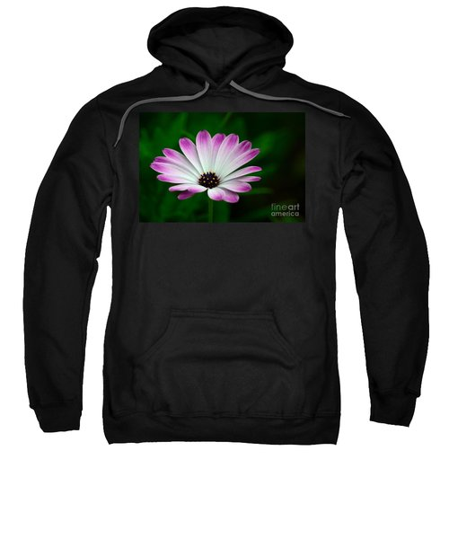 Violet And White Flower Petals With Yellow Stamens Blossoms  Sweatshirt