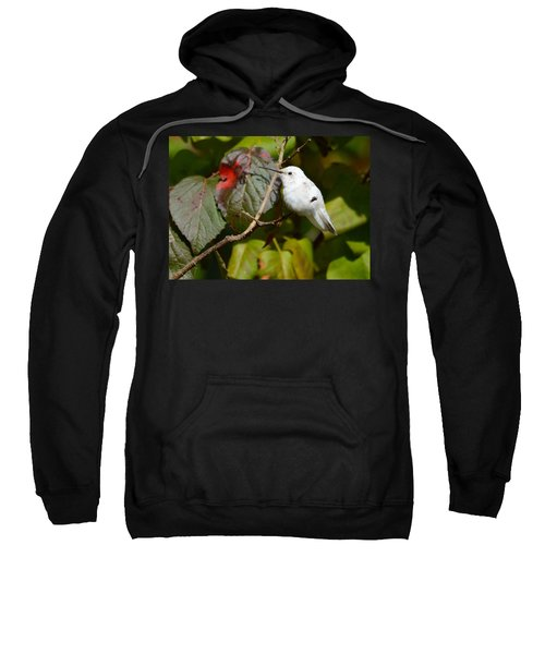 White Hummingbird Sweatshirt
