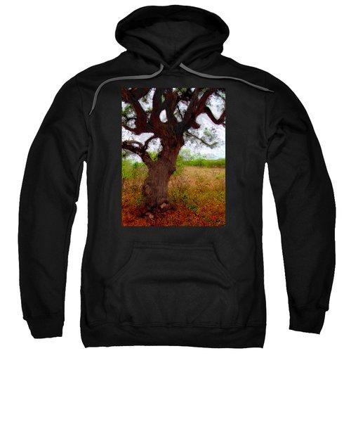 Da214 Wise Old Tree By Daniel Adams Sweatshirt