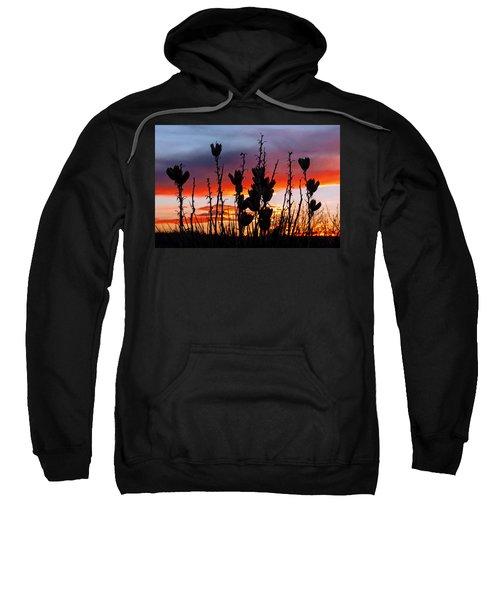 Yucca Sunset Sweatshirt