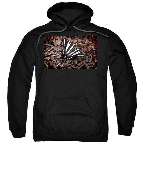 Zebra Swallowtail Butterfly Sweatshirt