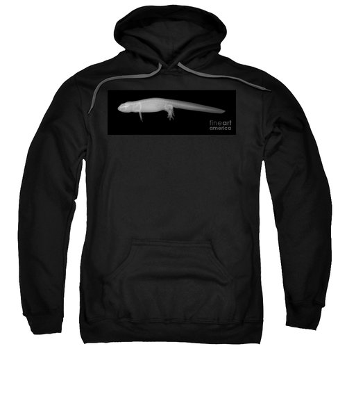 Newt Sweatshirt by Ted Kinsman