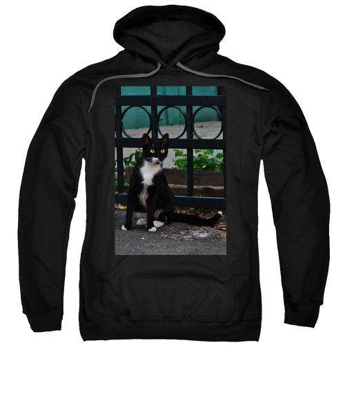 Black Cat On Black Background Sweatshirt