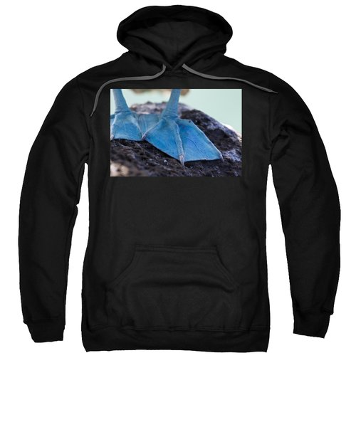 Blue Footed Booby Sweatshirt by Dave Fleetham