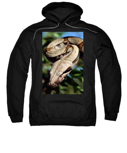 Boa Constrictor Boa Constrictor Sweatshirt by Claus Meyer
