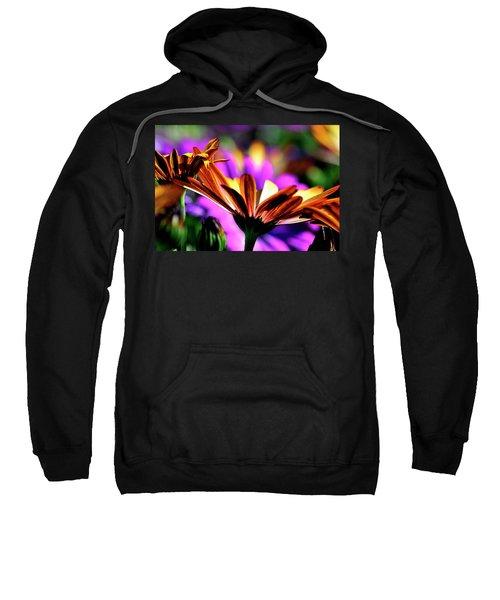 Color And Light Sweatshirt