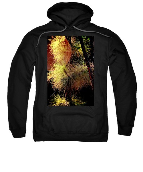 Florida Tree Sweatshirt