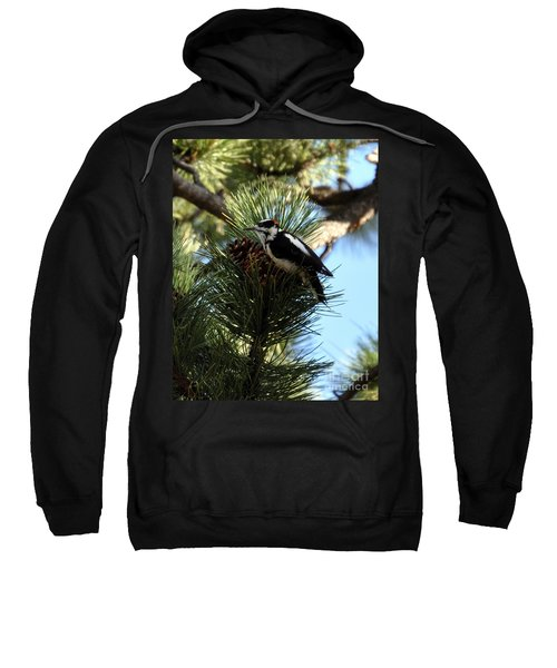 Hairy Woodpecker On Pine Cone Sweatshirt