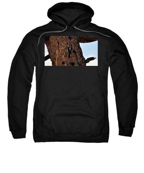Hairy Woodpecker On Pine Tree Sweatshirt